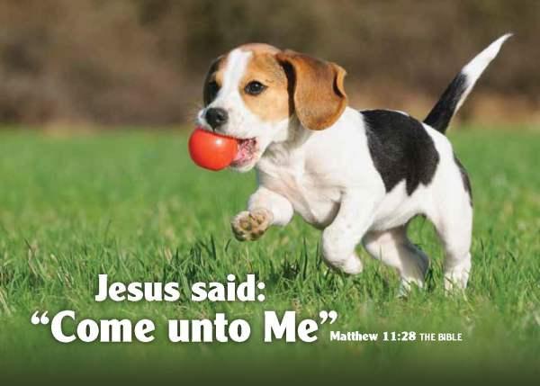 Beagle-Matt-1128[1]