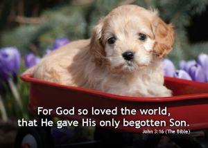 John316_5x7-Text-2014-Puppy[1]
