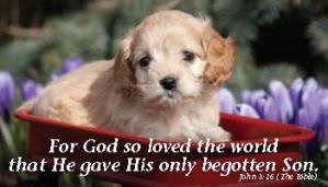 Puppy-in-wagon-John-3.16[1]