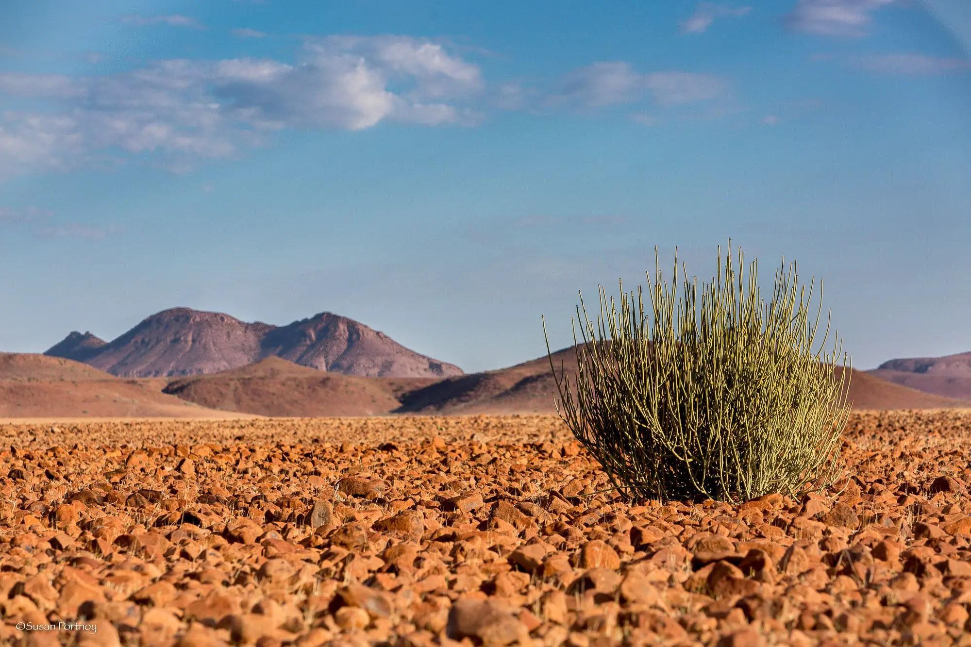 Deserts Habitat