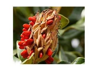 Yüzyıllar sonra filizlenen tohumlar