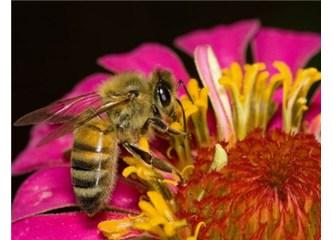 Küçücük bir arının bu kadar fedakâr olması evrimle açıklanabilir mi?