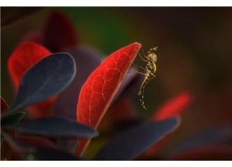 Küçücük bir sivrisineğin vücudunda nasıl bu kadar mucize yaratılır?