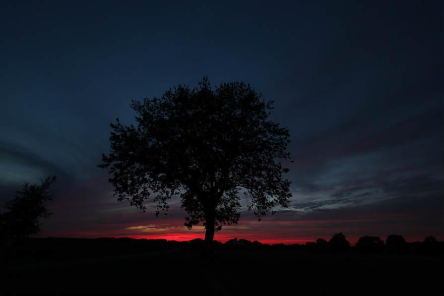 夜明け 草原 木