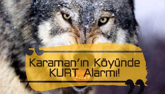 Karaman'ın Köyünde KURT Alarmı!