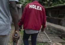 NDLEA, IBRANDTV