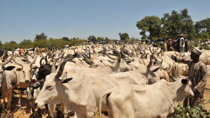 Agro pastoral project to spend N300 million for cattle market upgrade
