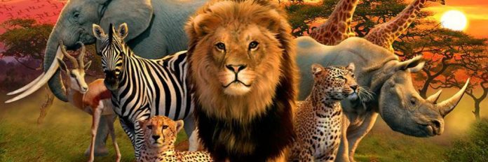 Wildlife, Nigeria, United Nation iBrandTV