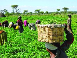 IFAD $360m grant targets 250,000 small holder farmers in Nigeria