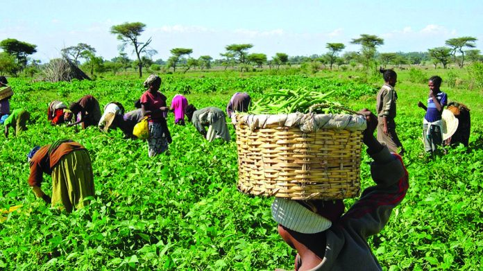 IFAD $360m grant targets 250,000 small holder farmers in Nigeria