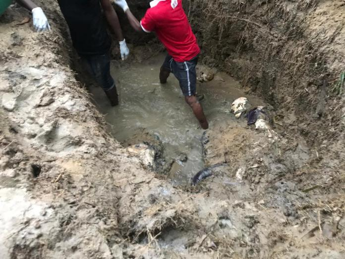 Killers bury 3 persons alive for exposing Oil theft operations in Ogoniland