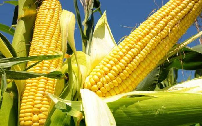 Breaking: CBN adds Maize importation to list of 41 banned items