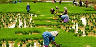 ABP: NIRSAL aids structuring of FCT farmers into 16 Agro Geo-Cooperatives