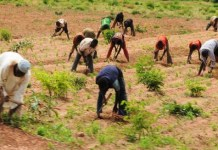 BUK, Dantata foods to promote carbon trading through regenerative Agriculture –official