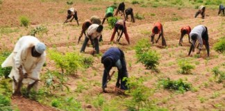 2021 Farming Season: Govt. approves purchase, distribution of agricultural inputs