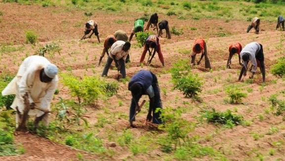 21, 000 farmers to benefit from NALDA intervention – Coordinator