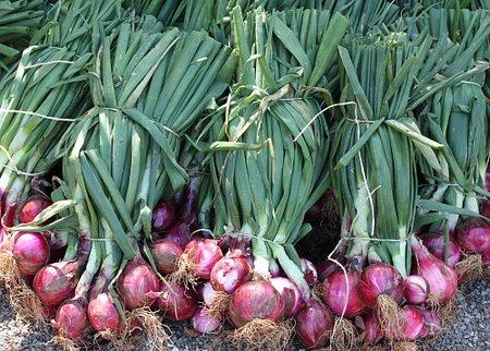 Onion Farmers Association of Nigeria