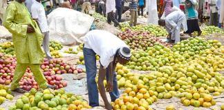 Tree Planting: NCF, Keystone Bank to plant 100 fruit trees