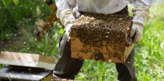 Bee farming can generate $10bn for Nigeria annually – Envoy