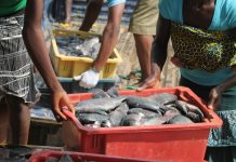 Fish scarcity looms in Nigeria as Local farmers threaten protest over prices