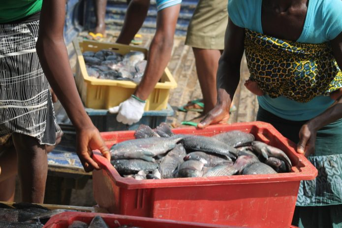 Nigeria's fish farmers target3.5m metric tonne annual consumption