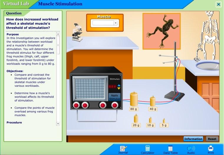 virtual-lab-muscle