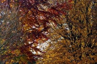 Herbstauswahl_04
