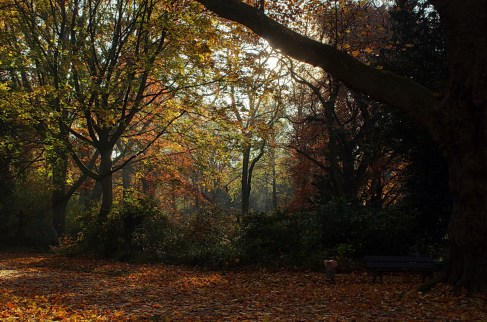 Herbstauswahl_12