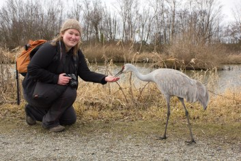 Willow meets the Cranes