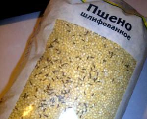 Мукоед как вывести из квартиры. Как избавиться от суринамского мукоеда на кухне