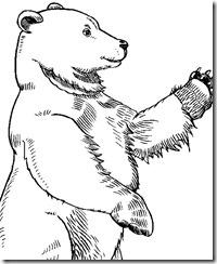 Bear-Bruin