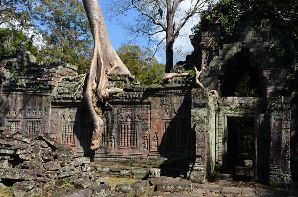 Preah Khan pohon