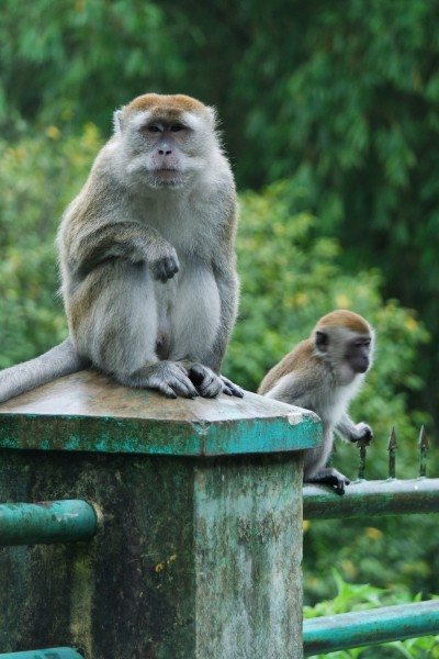 SAM_1988 monyet