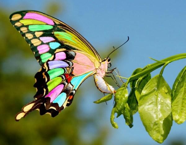 Самые красивые бабочки в мире irka