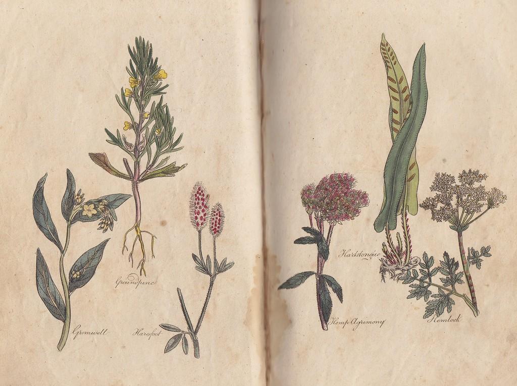 Постеры лекарственные растения