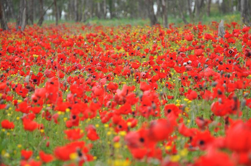 דרום אדום- צילום רפי בביאן (2)