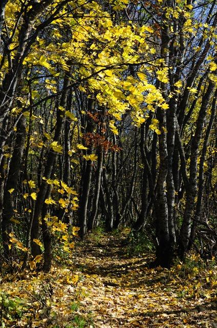 Осень на Машуке