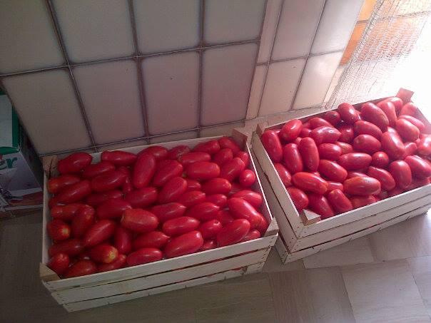 futura salsa