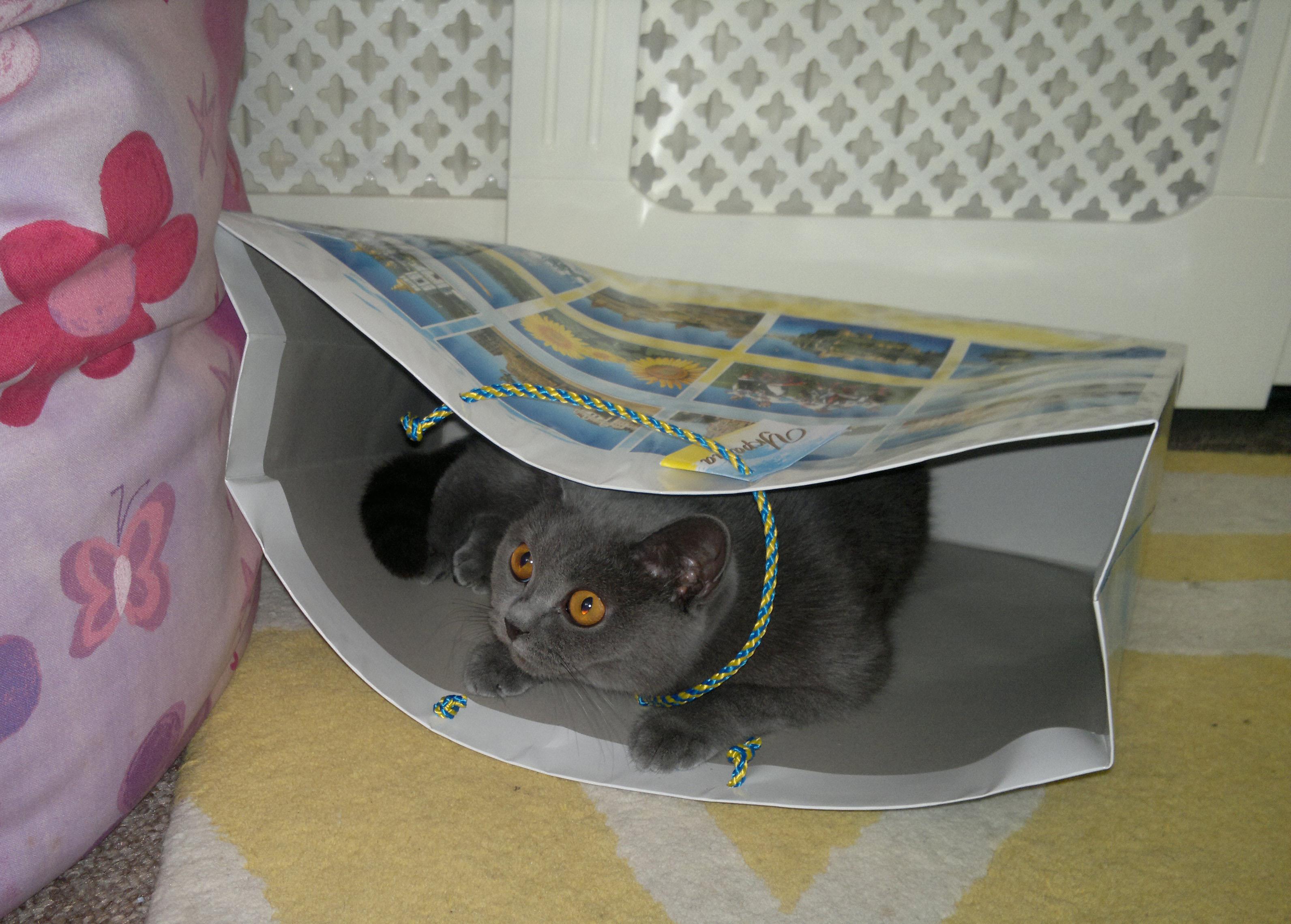 Doosya hiding