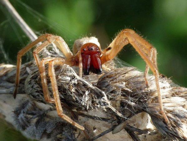 Самые ядовитые и опасные пауки в мире: vova_91 — LiveJournal