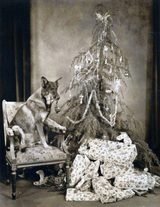 christmas rin tin tin 1927a