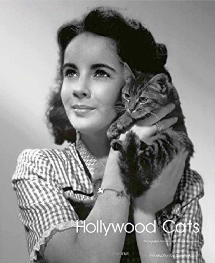 hollywood cats cover 00b