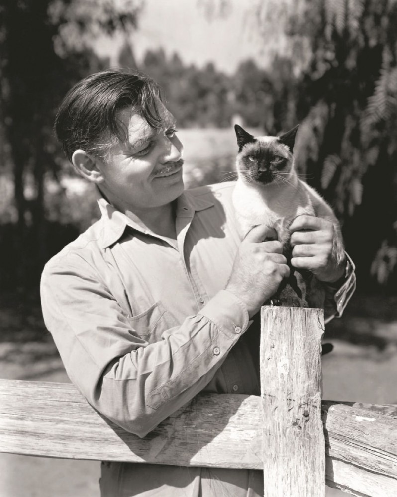 clark gable cat 00a
