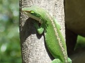 Photo of Gecko on Tree