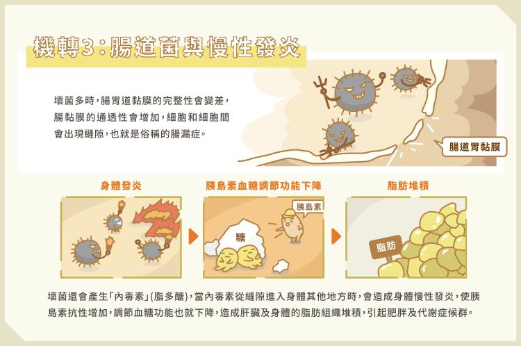 05_腸道菌影響胖瘦 3關鍵養出瘦子菌