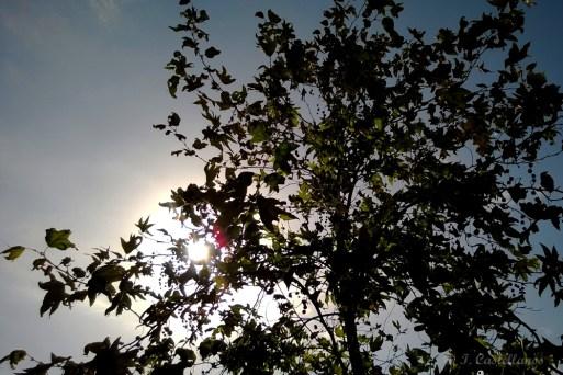 Grand Park - Morning Sun