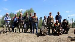Sivas'ta domuzlar tarlaları talan etti, avcılar nöbet tuttu