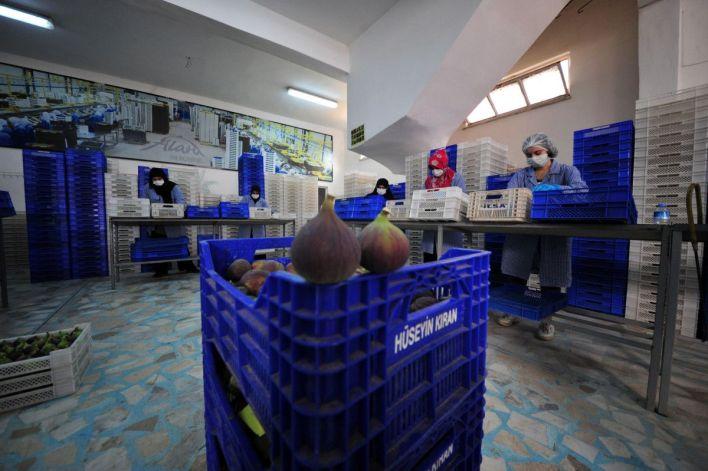 bursa siyahi inciri dunya pazarina ihrac ediliyor 99702