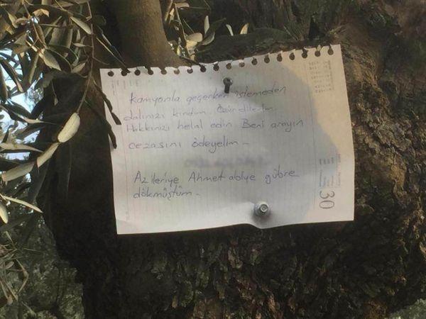 Kırdığı dal için zeytin ağacına not astı