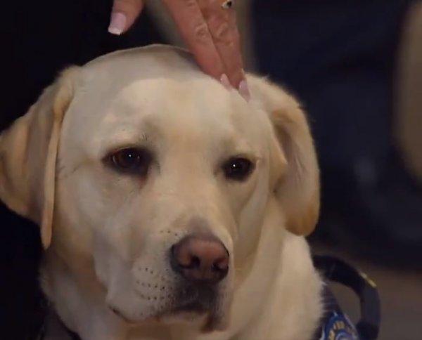 ABD eski başkanı Bush'a köpeği yas tuttu